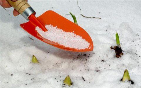 Подкормка по снегу