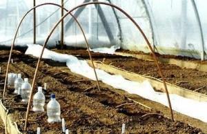 Установленные на грядках дуги позволят быстро создать дополнительное укрытие