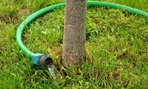 После подкормки растения нужно полить