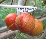 """Как будто вылеплены вручную помидоры сорта """"Серебристая ель"""""""