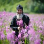 Постоянный прием Иван-чая способствует долголетию