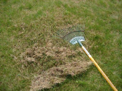 Прочесывать газон удобно веерными граблями