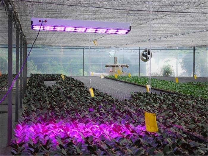 Светодиодные лампы имеют направленное излучение