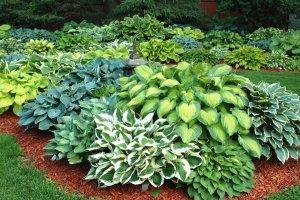 Растения травянистые
