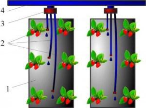 Схема капельного полива клубники в мешках
