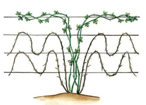 Схема подвязки