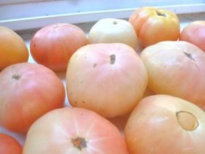 сорта помидор для парника
