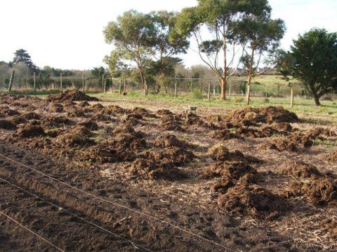 Удобрение почвы свежим навозом