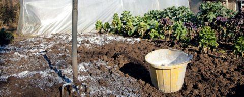В любом случае удобрения следует заделывать в почву