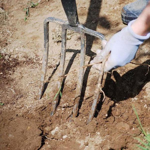 Обработка земли вилами