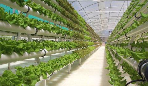 Вид стеллажа зависит от растений, выращиваемых в теплице.
