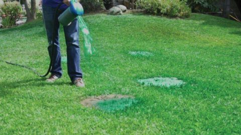 Восстановление травяного покрова гидропосевом
