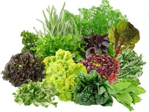 Зелень, богатая витаминами и микроэлементами, востребована в любое время года