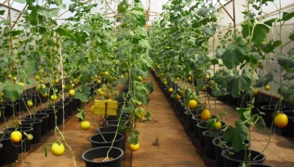 Выращиваем рассаду, фото правильного расположения культур