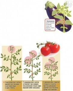 выращивание помидор в теплице зимой